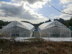 Japanese greenhouses!
