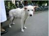 被災地の犬も心に傷 麻布大、ホルモン値から判断